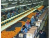 citrus-packing-house